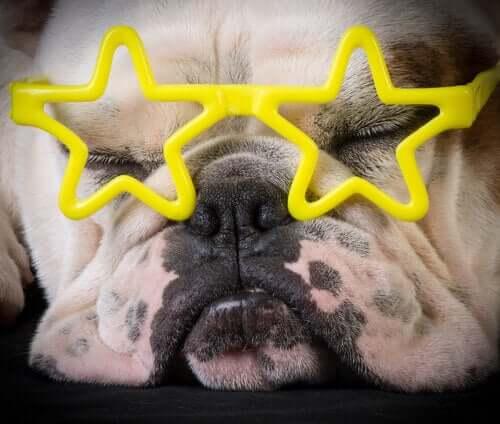 Animali diventati stelle mediatiche: di quali diritti godono?