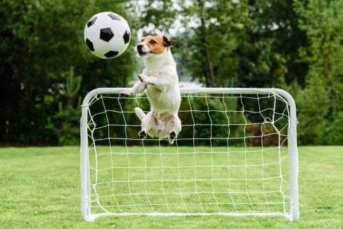 Cane che gioca a calcio