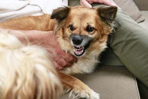 Cosa vuole dirci un cane che ringhia?