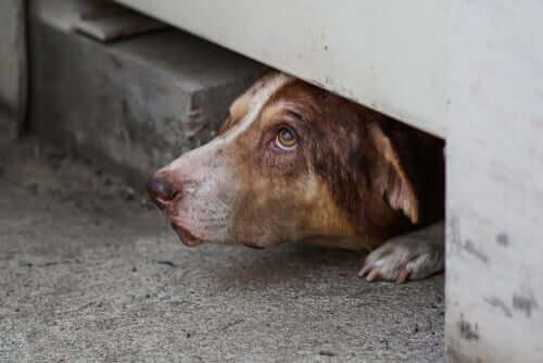 spesso i cani si nascondono a causa dell'ansia o di una malattia