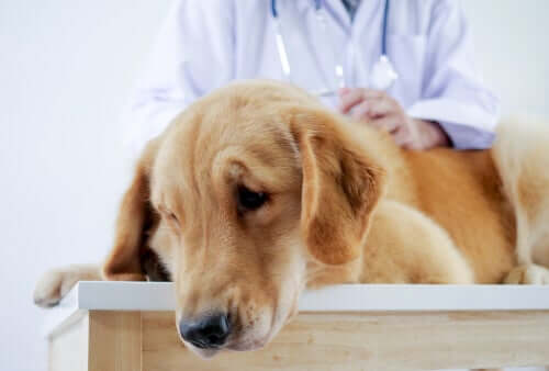 Cane sottoposto a visita veterinaria