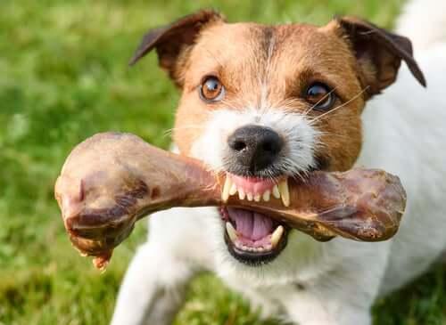Quando i cani aggrediscono per il cibo