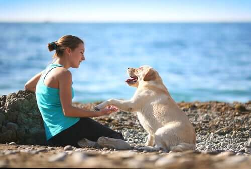 comunicare col cane