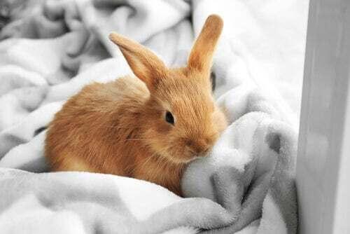 Come prendersi cura di un coniglio nano