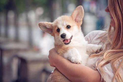 È dimostrato: coccolare un cucciolo aiuta a ridurre lo stress
