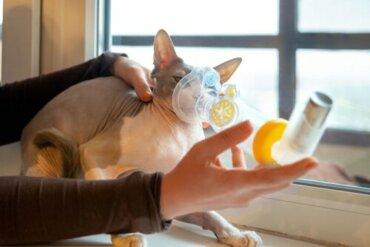 Disturbi respiratori nei gatti: cause e sintomi