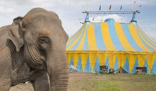 Elefante da circo