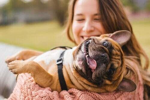 6 errori comuni con gli animali domestici
