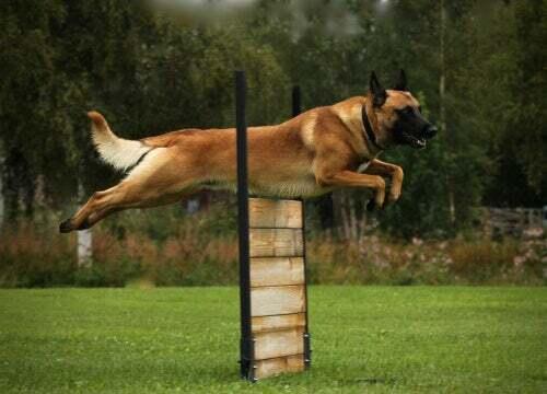 L'importanza dell'esercizio fisico per i cani