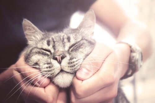 mediamente, i gatti vivono più a lungo dei cani, soprattutto in condizioni ambientali favorevoli