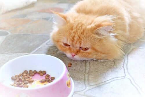 Come dev'essere l'alimentazione di un gatto ammalato?