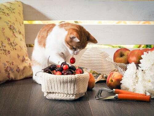 Frutta e verdura proibite per i gatti: attenzione!