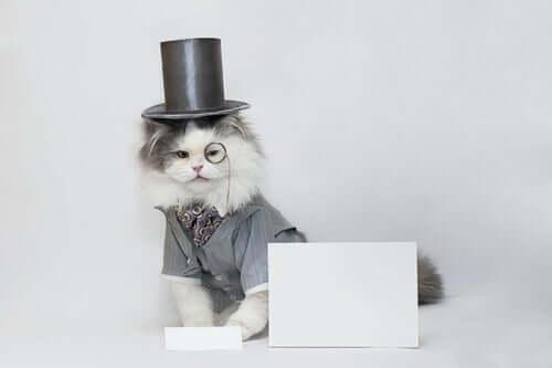 Animali diventati stelle mediatiche gatto con il cilindro