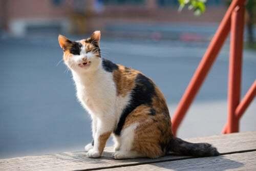 Gatto con cancro alla pelle: gatto pezzato
