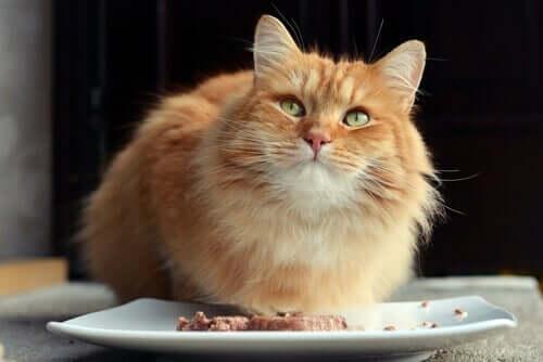 il controllo dell'alimentazione è un fattore molto importante nella prevenzione e nel trattamento del diabete nei gatti
