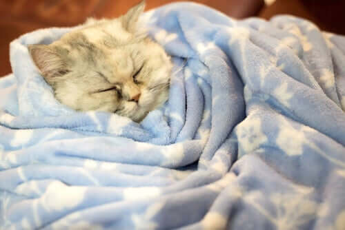 I gatti entrano in letargo in inverno?