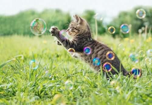 incoraggiare un gatto a giocare significa anche difenderlo dall'obesità