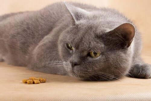 alimentare correttamente un gatto ammalato può modificare positivamente il decorso di una patologia