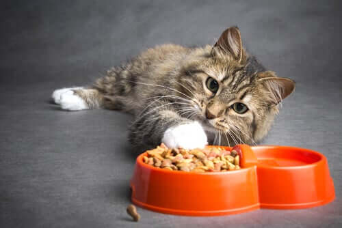 La corretta alimentazione per un gatto con tumore