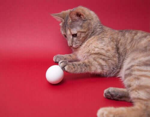 Gatto che gioca con la pallina
