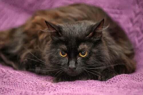 Gatto scuro