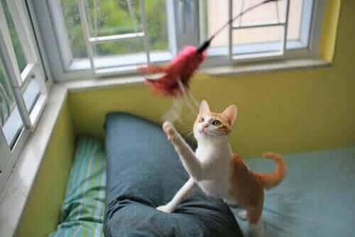 per incoraggiare un gatto a giocare, un'ottima strategia è quella di imitare la caccia