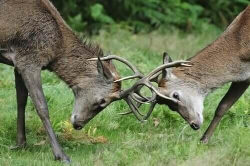 La competitività tra specie non carnivore