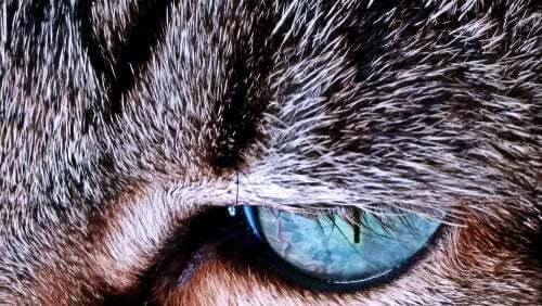 Perché la pelliccia dei gatti cambia colore?