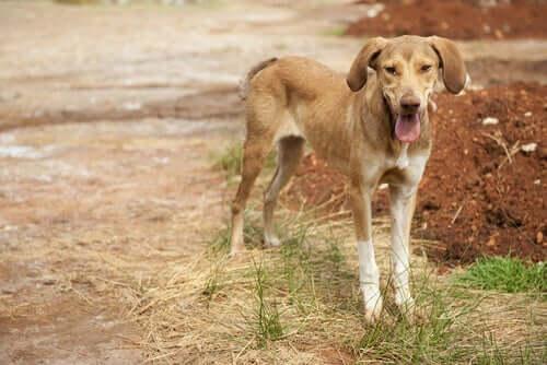 Il cane perde peso: possibili cause e rimedi