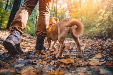 Razze di cani adatte per il trekking