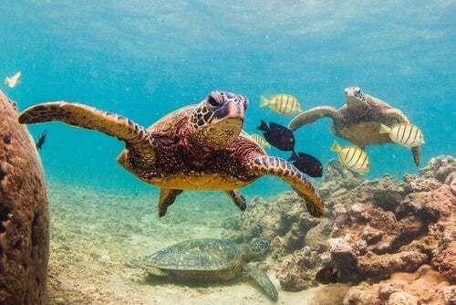 Un mondo senza tartarughe: un rischio per il pianeta