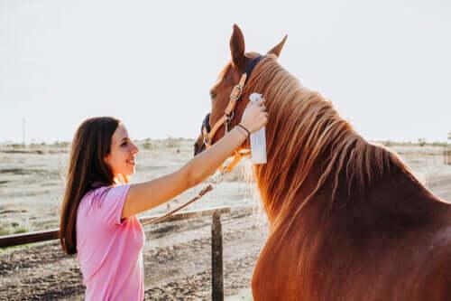 Trattamento della tigna nei cavalli