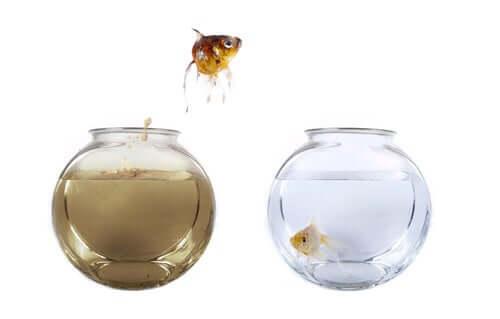 Come regolare il ciclo dell'acqua nell'acquario