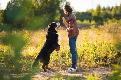 Quali sono gli obiettivi dell'addestramento del cane?