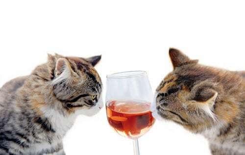 Non bisogna mai dare degli alcolici al gatto!