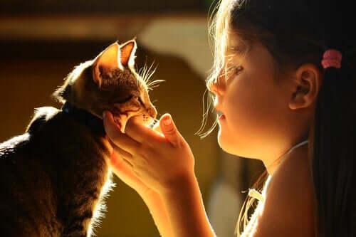 Rapporto tra esseri umani e gatti