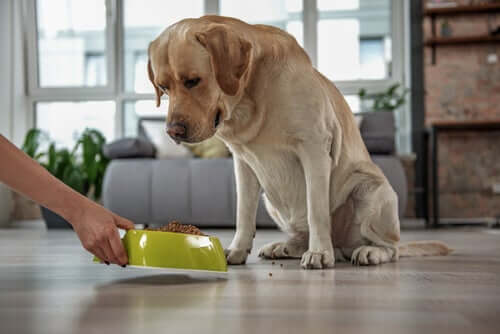 Sintomi della stitichezza nel cane e cosa fare