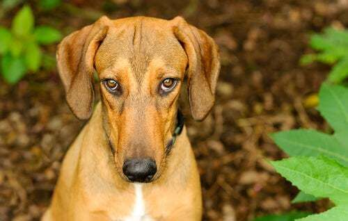 I cani provano il senso di colpa? La risposta è no