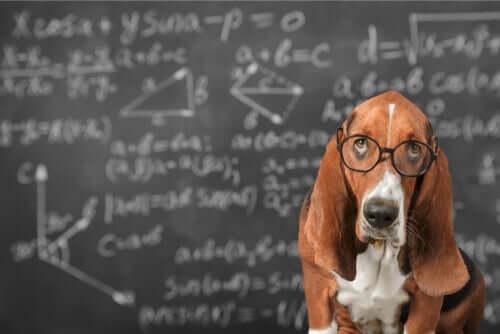 È possibile stimolare l'intelligenza dei cani?