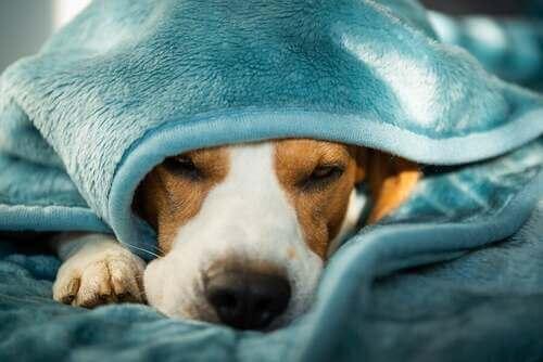 Salute e malattie mentali nei cani: come curarle