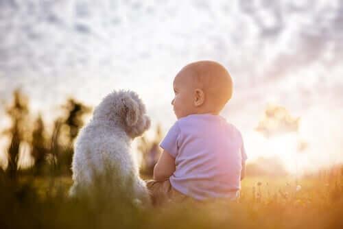 l'intelligenza media di un cane è paragonabile a quella di un bambino di due anni