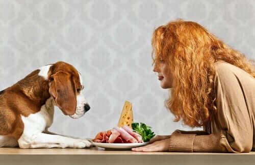 Quali sono i bisogni nutrizionali di un cane?