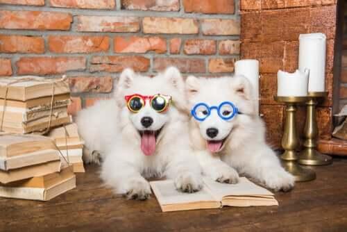 esistono diversi giochi per stimolare l'intelligenza dei cani