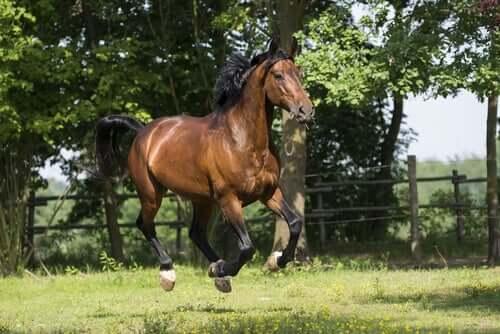 Le origini del cavallo Maremmano