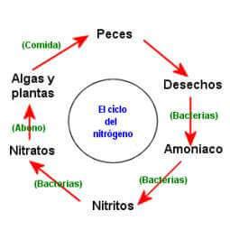 il ciclo dell'acqua nell'acquario si articola in tre fasi distinte