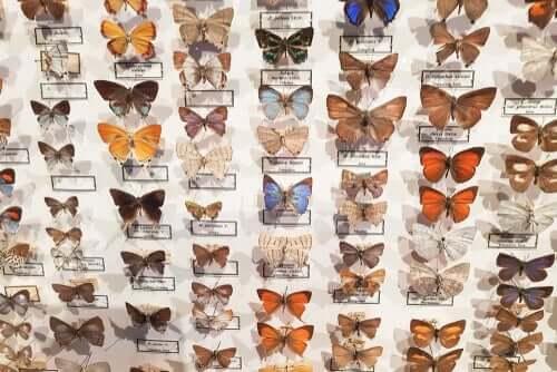 Il museo entomologico CURLA: farfalle protagoniste
