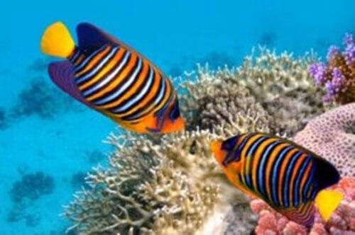 5 curiosità sui pesci colorati