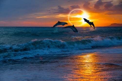 Delfini che saltano durante un eclissi solare