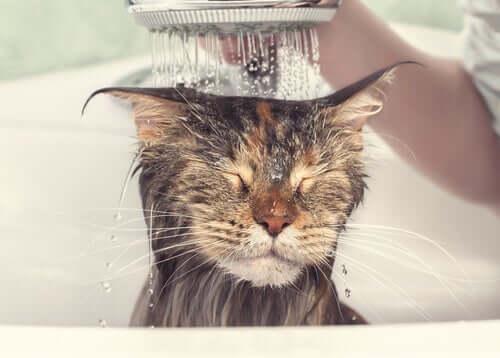 micio sotto la doccia