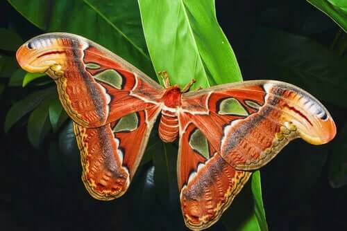 farfalla con le ali rosse